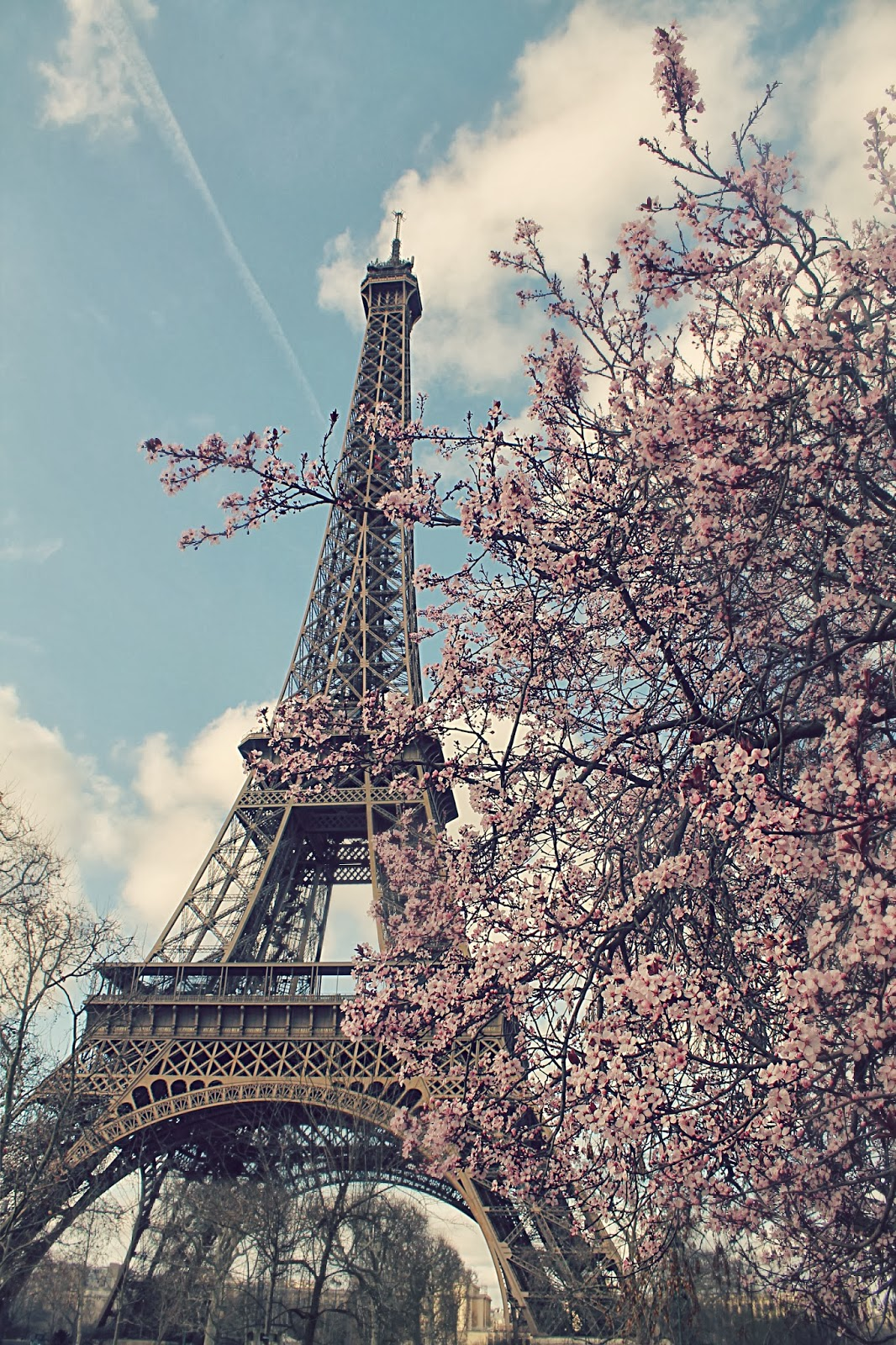 Eiffel Tower Cherry Blossoms Paris In Spring Time 66