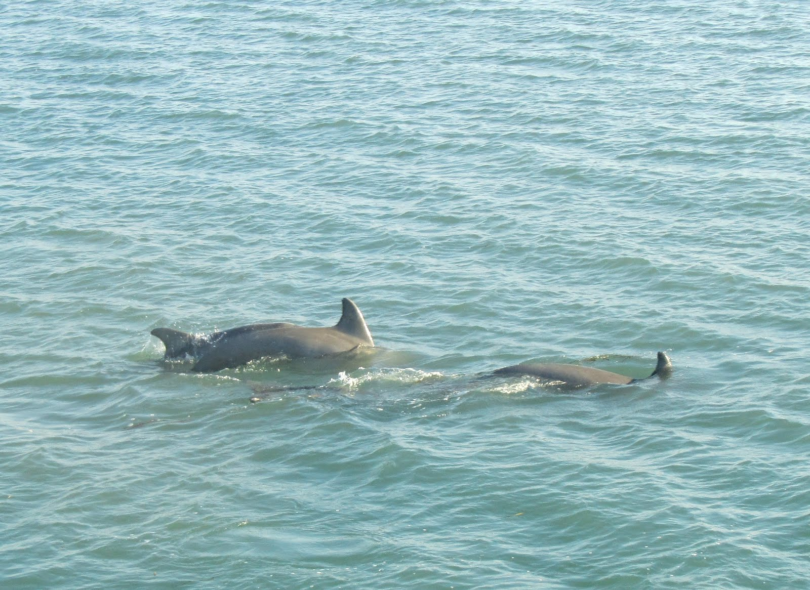 American Diving The Original Dolphin Watch South Padre Island Tx