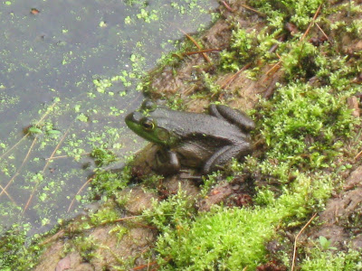 if you would like to attract frogs to your yard