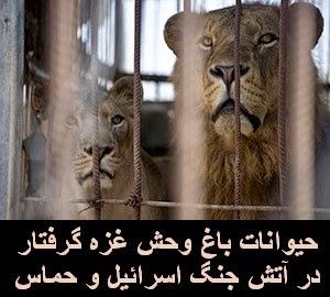 حیوانات باغ وحش غزه گرفتار در آتش جنگ اسرائیل - حماس