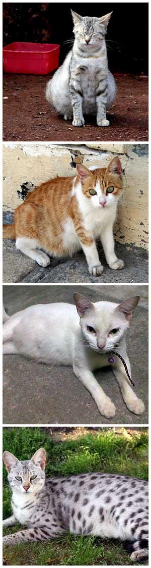 tr cat pregnant popular
