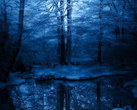 Bosque en invierno for Jardin de invierno pablo neruda
