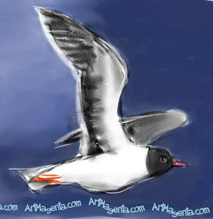 Little Gull is a bird drawing by digital artist and illustrator Artmagenta