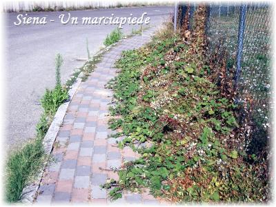 Siena: un marciapiede