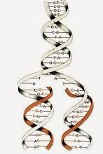 KLEISER DNA PROJECT LINK