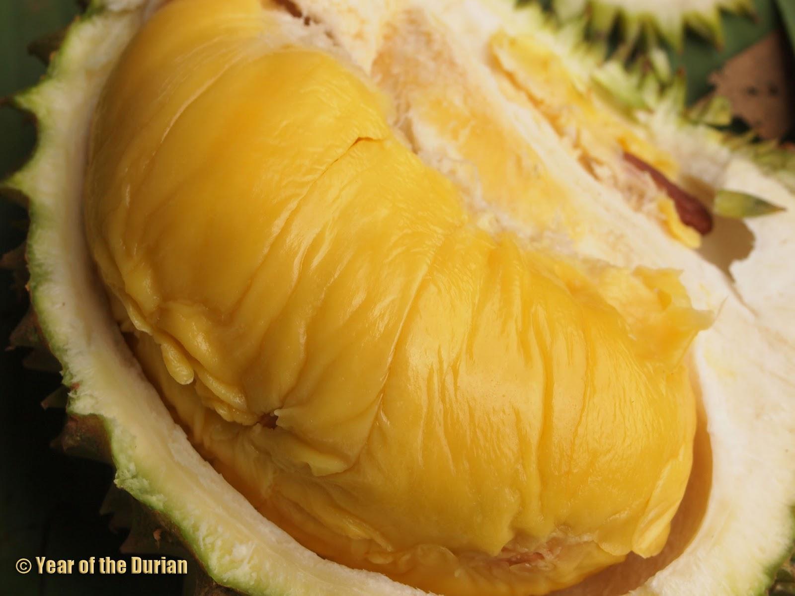 the top 10 durian blogs. Black Bedroom Furniture Sets. Home Design Ideas