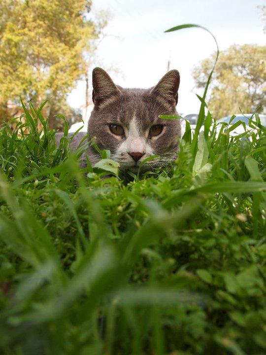 Cat from Gat Israël