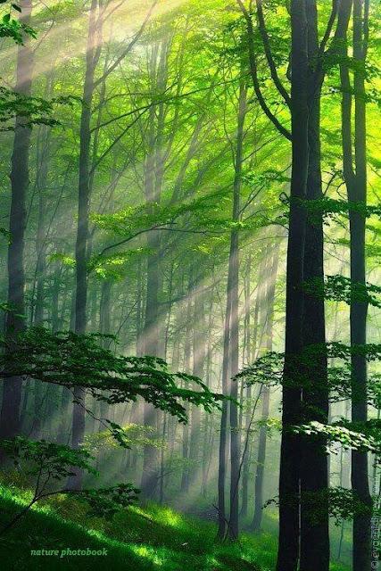 green forest summer