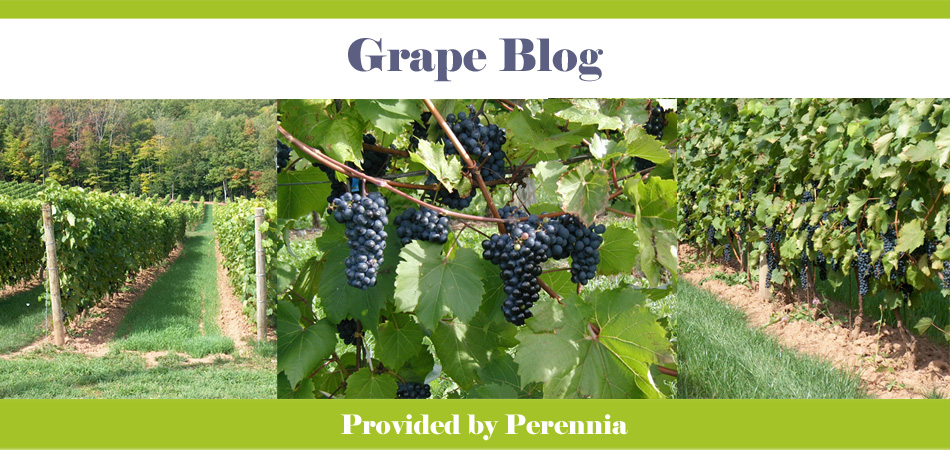 Nova Scotia Grape Blog