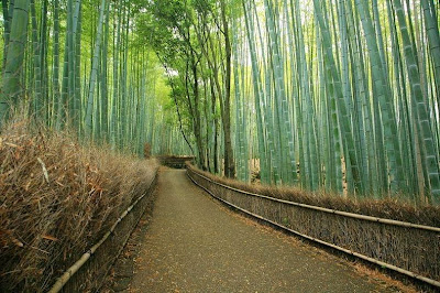 hutan bambu sagano