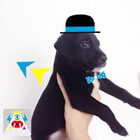 xtrapop app - Leite com biscoitos blog