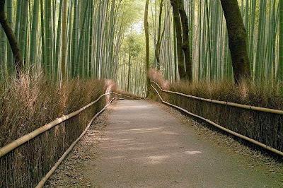 hutan bambu sagano-3