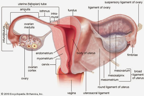uterus problems treatment specialist dr.senthil kumar, chennai, panruti, cuddalore