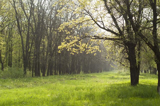 Весна, городская роща. г. Новочеркасск