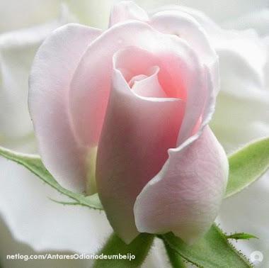 Beleza de uma Flor