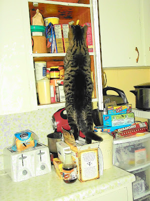 Cat in the cupboard