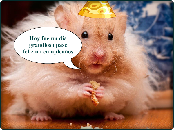 Fotos comicas de feliz cumpleaños - Imagui
