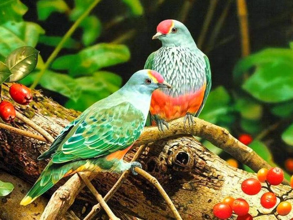Guacharaca ave reproduccion asexual en