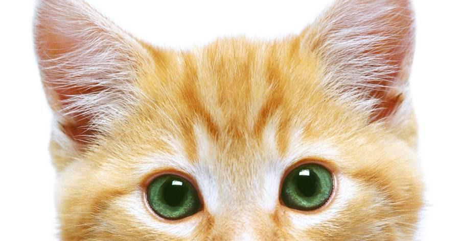 Kisah Kucing Kesayangan Islam Dihatiku