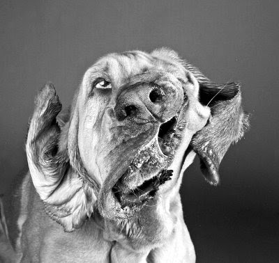 犬の顔面写真