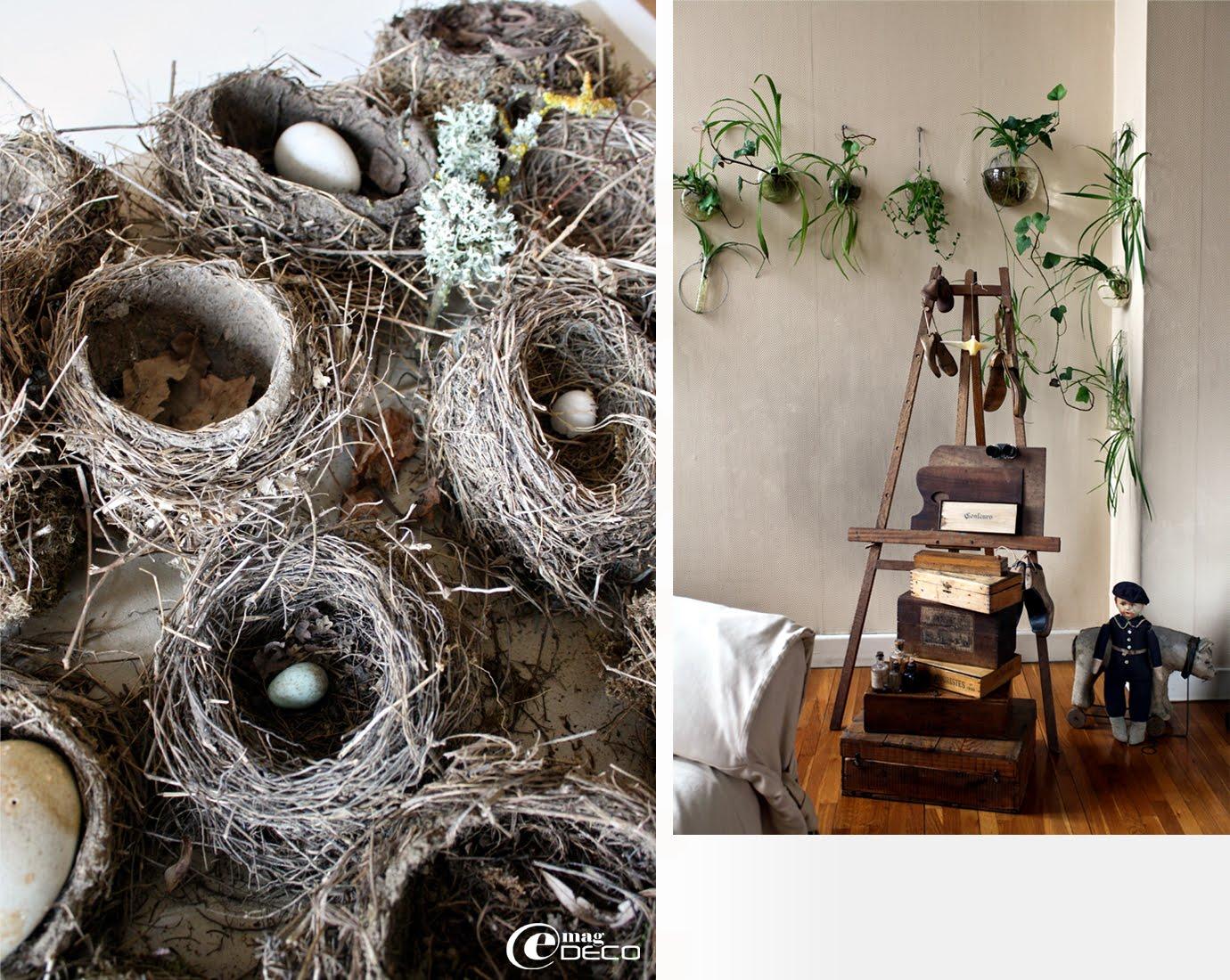 Collection de nids d'oiseaux et chevalet de peintre