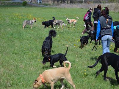 Dog Guards Treffen