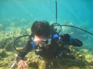 Tentang Dunia Bawah Laut