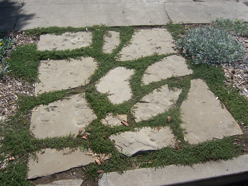 Flagstone Filler Plants : The minute gardener photo flagstone with creeping