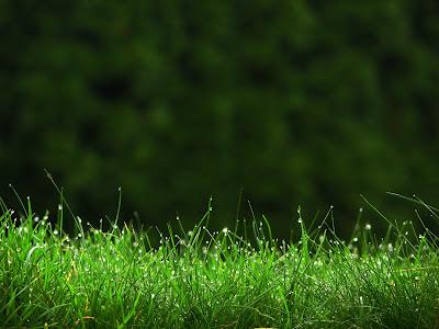 Nature Wallpapers,free nature wallpaper,nature wallpaper,nature wallpapers free,nature wallpapers for desktop,hd nature wallpaper,nature desktop wallpaper,wallpaper nature,nature desktop,nature wallpapers desktop,screen backgrounds free,wallpaper download,natural wallpapers