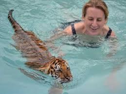 Swim with a Tiger