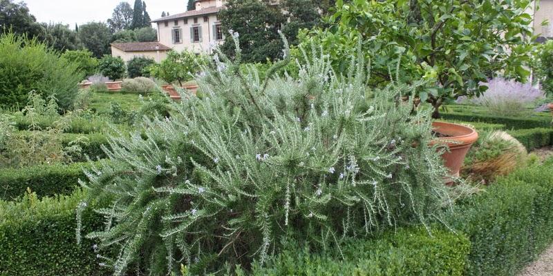 Havefolket: i monty dons fodspor   villa di castello