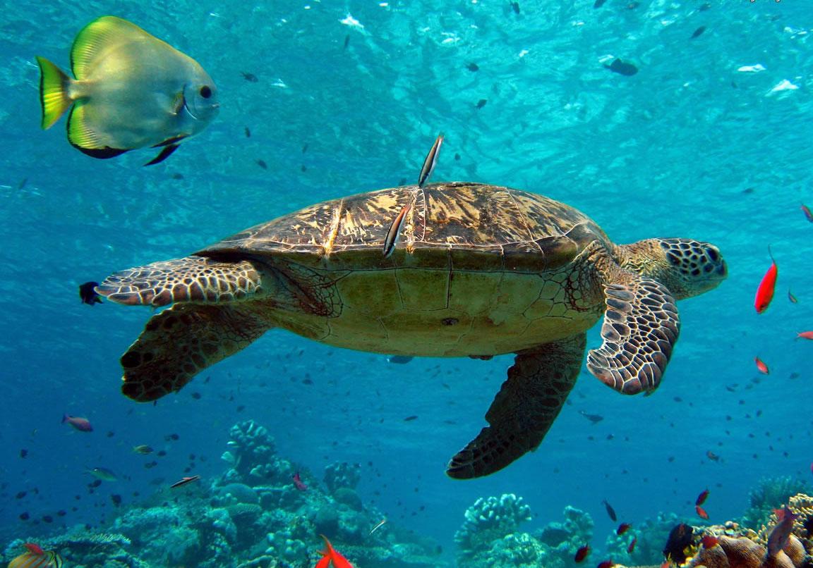 Are Sea Anemones Plants or Animals?