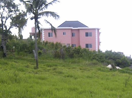 Jamaican Till I Die August 2012