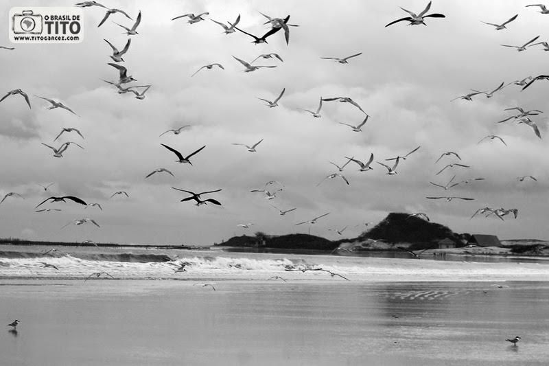 Revoada tendo ao fundo a ponta do Boiador, na  praia do Farol (da Princesa), na ilha de Maiandeua (Algodoal), Pará