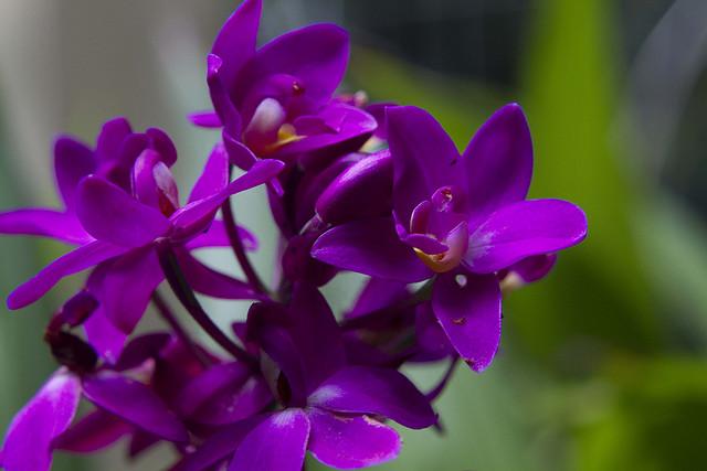 ipe de jardim botânico: de Pernambuco e algumas espécies do Jardim Botânico do Recife