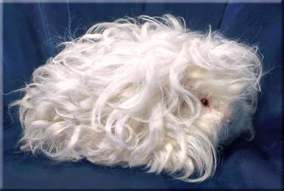 personaje animal 22 x 22 cm fell animal fell animales Animal en miniatura Collie perro de pelo natural