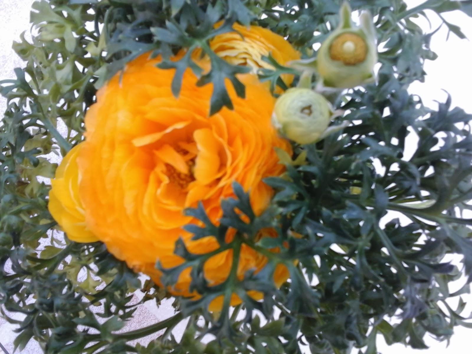 Flores para primavera y verano - Plantas de sol directo para jardin ...