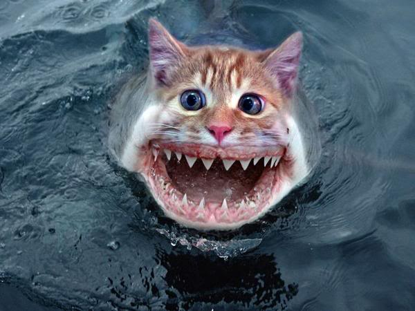 Cat fish fish world for Fish cat 4