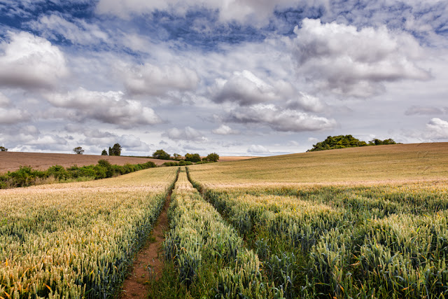 Yellow Cotswold wheat field under some beautiful clouds by Martyn Ferry Photography