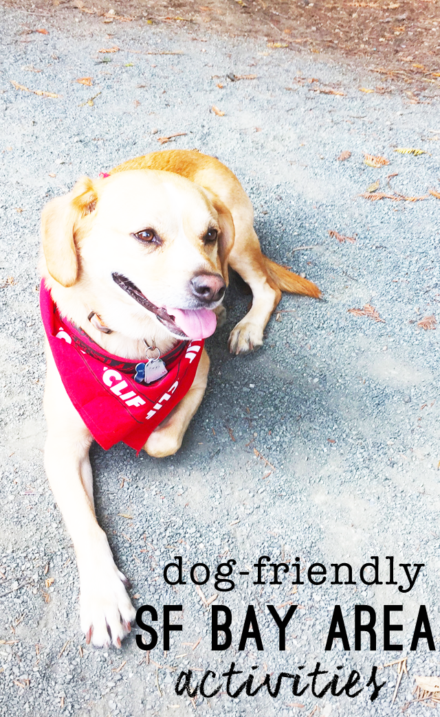 Dog Friendly Activities in San Francisco