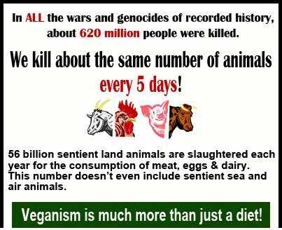 Bilderesultat for animals killed for food