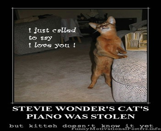 funny+cat