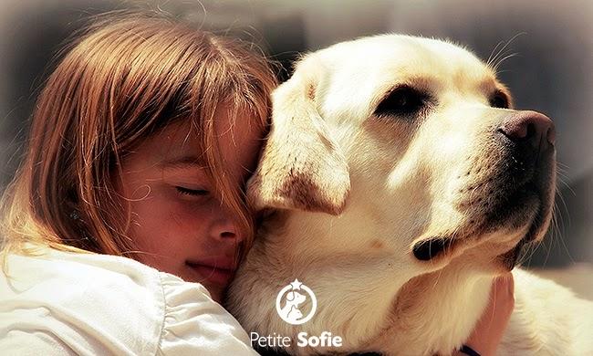 Estudo revela como se sentem os cãezinhos