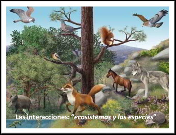 """Las intereacciones: """"ecosistemas y las especies"""""""