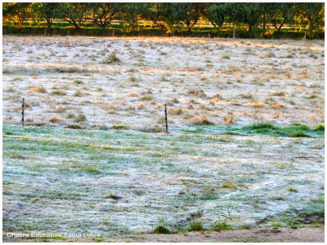 la helada sobre el pasto - ground frost - Chacra Educativa Santa Lucía