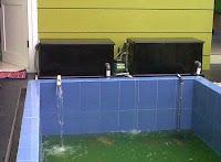 Penyebab Air Kolam Keruh dan Cara Mengatasi