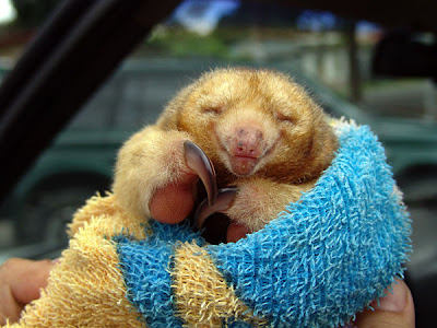 pictures of animal baby anteater habitat