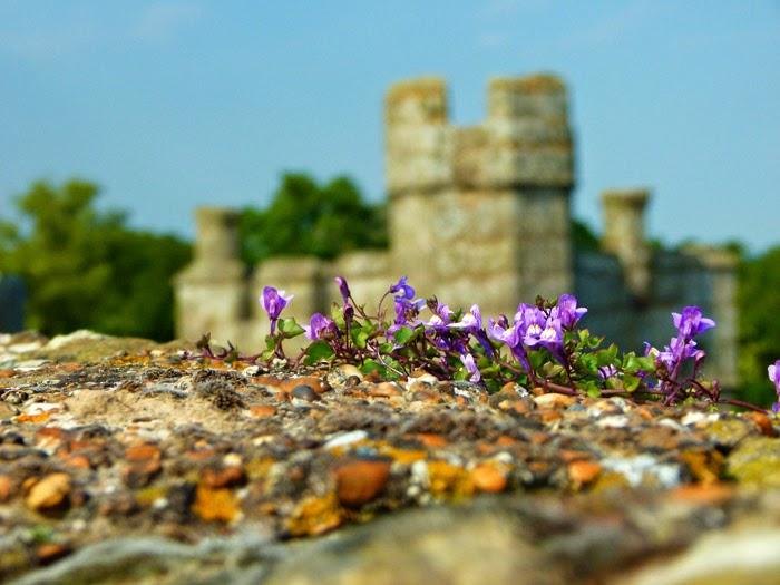Bodiam, castle walls, flowers, photogenic