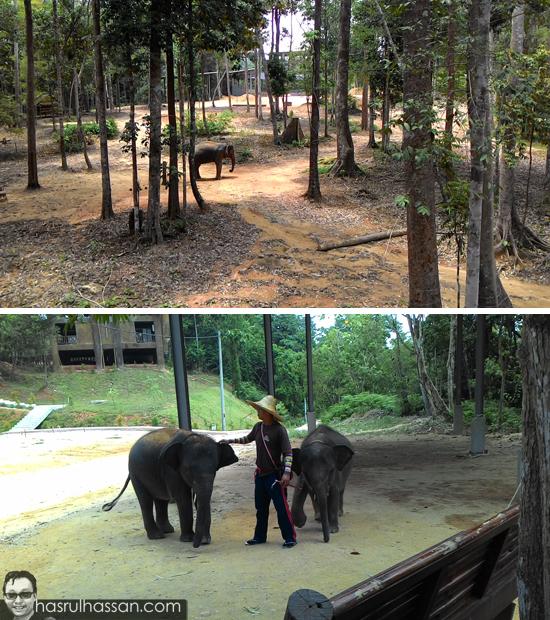 Kenyir Elephant Village (KEV) Kenyir Terengganu