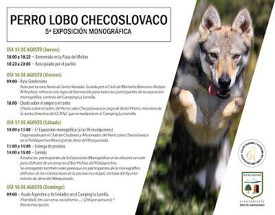 V exposición monográfica perro lobo checoslovaco jérez del marquesado camping la lomilla